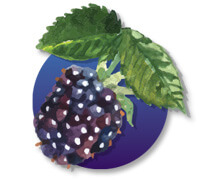 PT Air Freshener Mulberry Fragrance
