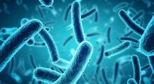 Industrial Septic Biological Waste Degrader