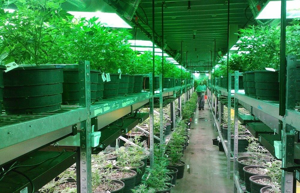 Pot Greenhouse Odor Control